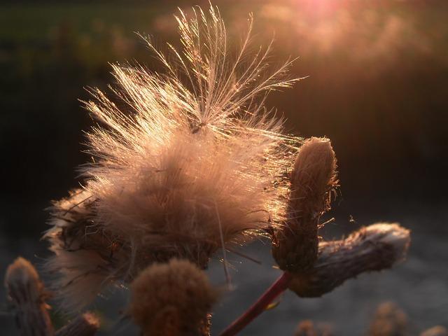 Herbs, Wild, Nature, Fields, France, Wild Herbs, Summer