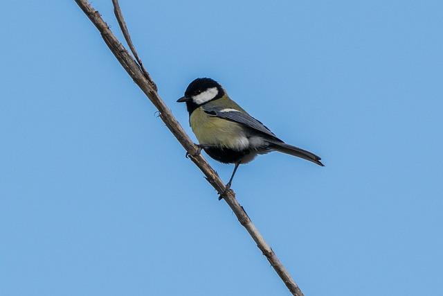 Birds, Nature, Wild Life, Open Air, Bird