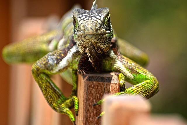 Wild Life, Animalia, Reptilia, Nature, Lizard, Wild