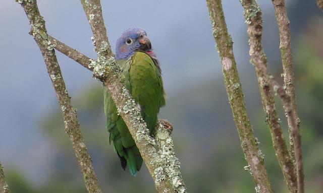 Birds, Nature, Wild Life, Parrot, Perico