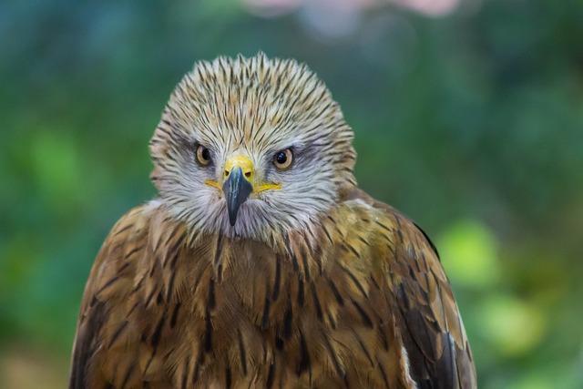 Wild Life, Birds, Nature, Animalia, Bird Of Prey, Peak