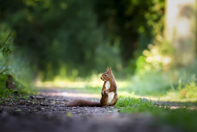 Squirrel, Nature, Cute, Wild, Mammals