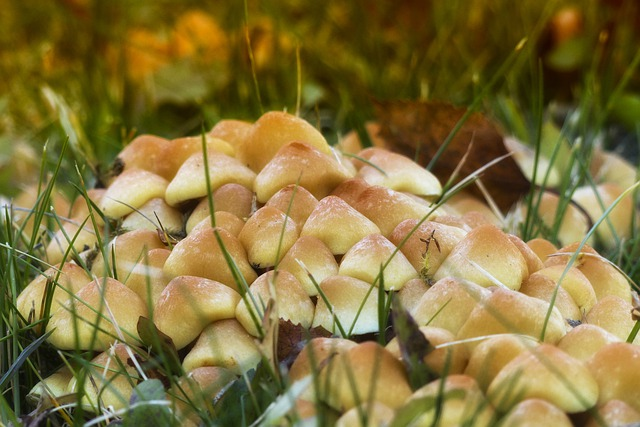 Wild, Mushrooms, Cluster, Nature, Plant, Toxic, Meadow