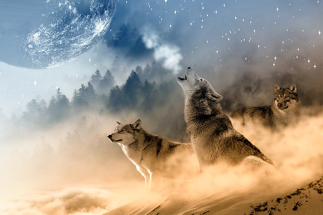 Wolves, Wolf, Howling, Moon, Stars, Night, Wild
