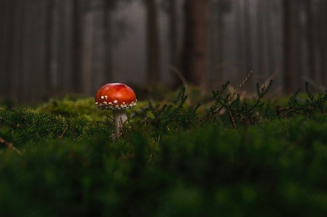 Mushroom, Fly Agaric, Wild Mushroom, Spore, Sponge