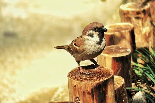 Nature, Bird, Wildlife, Compact, Animal, Outdoor, Wild