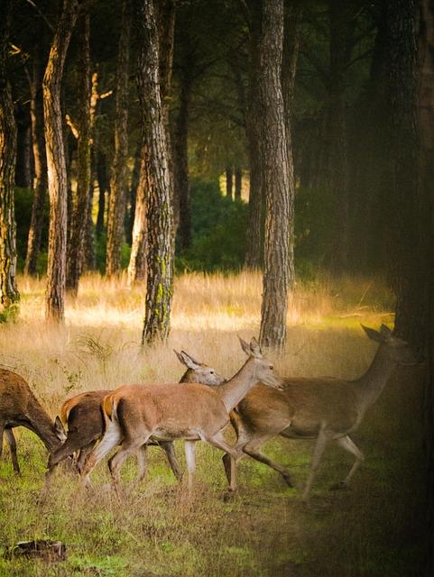 Roe Deer, Flock, Nature, Landscape, Wild, Animal World