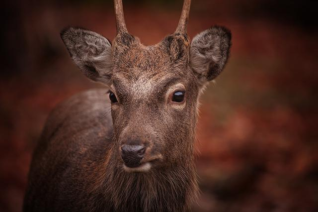 Roe Deer, Animal, Nature, Fallow Deer, Forest, Wild