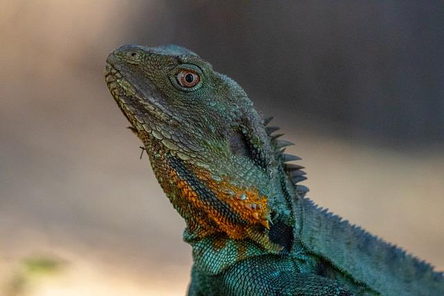 Lizard, Reptile, Wildlife, Nature, Animal, Wild, Head