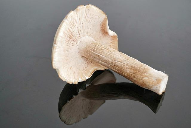 Wild, Large, White, Mushroom, Fungus, Nature, Food, Cap