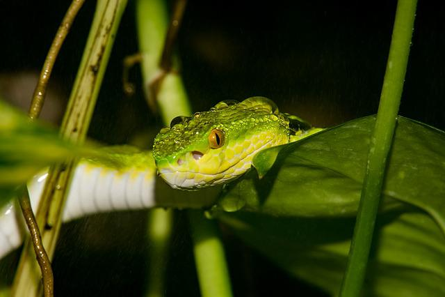 Animal World, Animal, Nature, Reptile, Wild, Rain