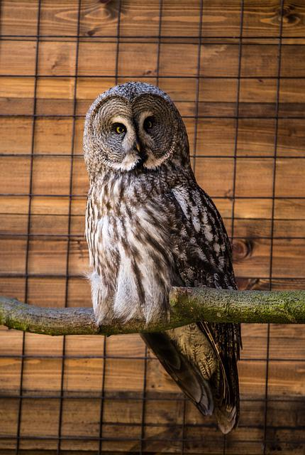 Wildlife, Animal, Bird, Nature, Wood, Owl, Zoo, Wild