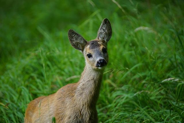 Roe, Nature, Park, Animals, Animal World, Animal, Wild
