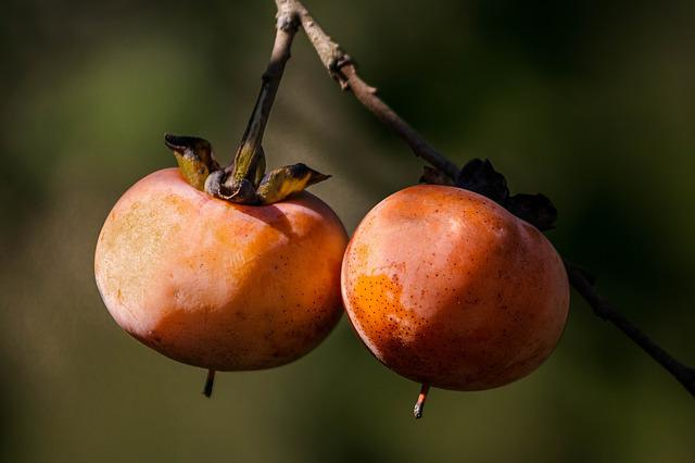 Wild Persimmon, Fall Fruit, Autumn Fruit