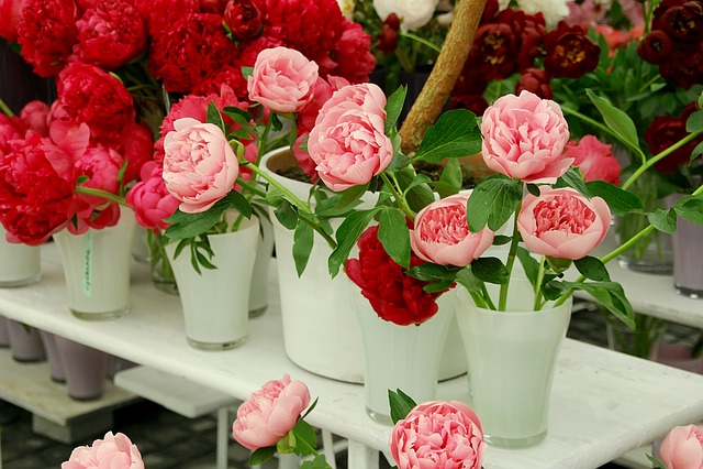 Wild Rose, Roses, Open Rose, English Rose, Rose Family