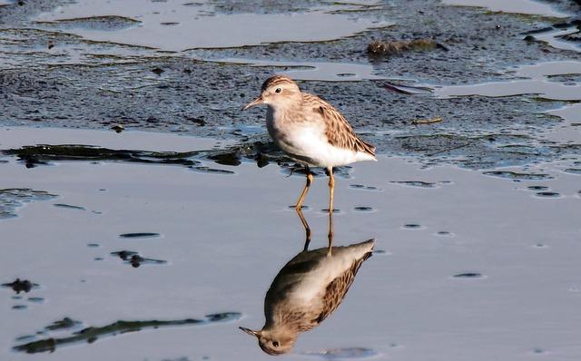 Migratory Bird, Wild, Bird, Wildlife, Small, Seasonal