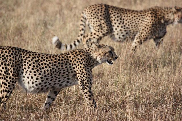 Africa, South Africa, Wild, Nature, Wildlife, Animals