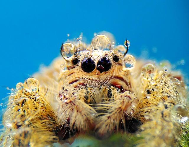 Spider, Macros, Nature, Wild