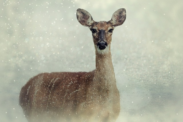 Roe Deer, Animal, Wild Animal, Wild, Snow, Winter