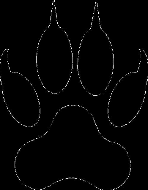 Wolf, Footprint, Lion, Tiger, Paw, Animal, Wildcat