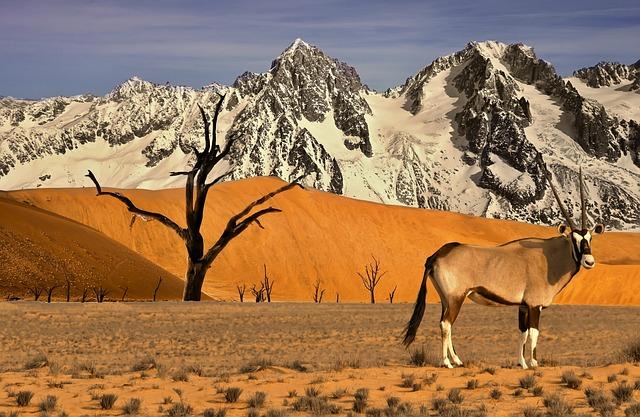 Wilderness, Mountains, Mountain, Gazelle, Tree, Animal