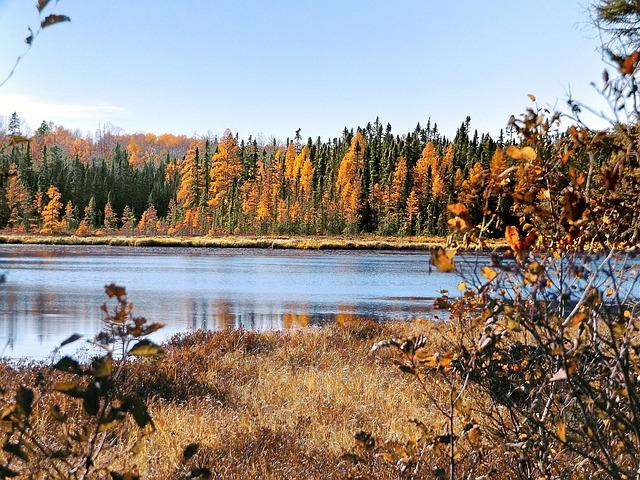 Autumn, Pond, Wetlands, Nature, Landscape, Wilderness