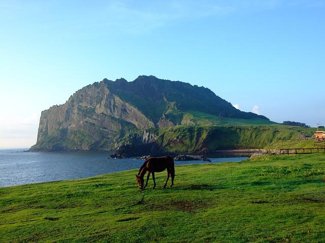 Jeju, Korea, Seashore, Horse, Landscape, Wilderness