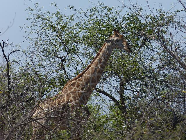 South Africa, Safari, Tourism, Africa, Wilderness