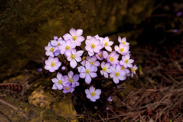 Flowers, Nature, Plants, Outdoors, Petal, Wildflower