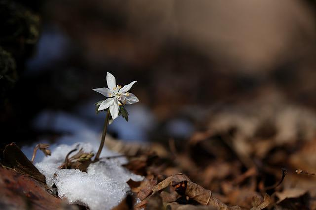 Nature, Outdoors, Plants, Leaf, Wood, Wildflower