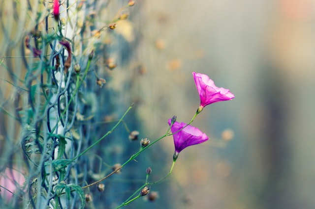 Color, Flowers, Pink, Plant, Plants, Wildflower