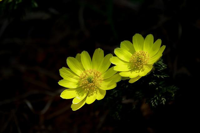Nature, Flowers, Plants, Wildflower, Multiple Seconds