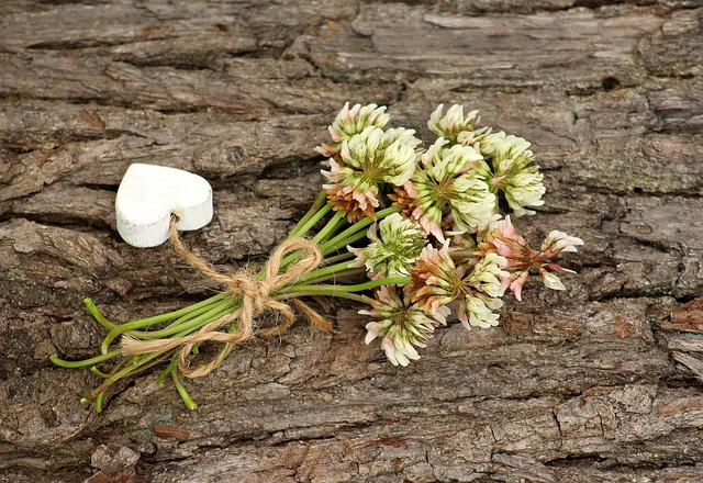 A Small Bunch, Clover, Wildflowers, Plants, Spring