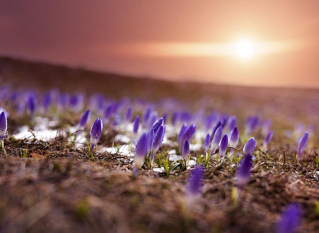 Sun, Flowers, Bloom, Nature, Plant, Wildflowers, Botany