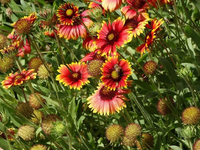 Wildflowers, Desert, Blooming