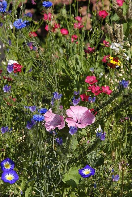 Flowers, Wildflowers, Flower Meadow, Bees, Mallow