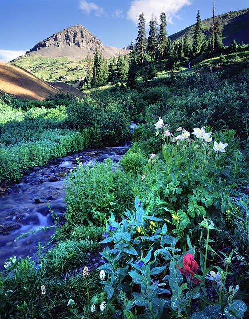 Wildflowers, Stream, Colorado, Ouray, Mine Tailings