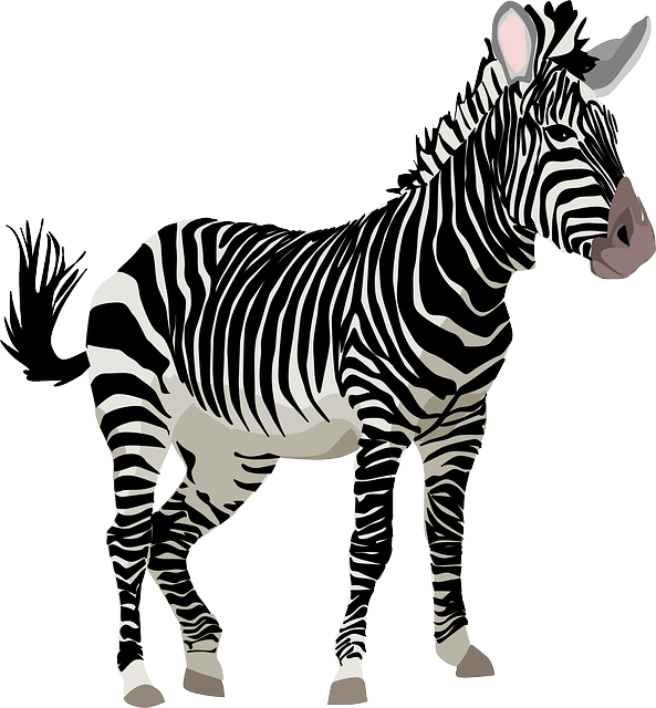 Zebra, Africa, Animal, Safari, Zoo, Wildlife