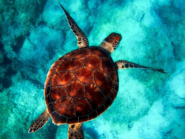 Sea, Turtle, Diving, Animal, Ocean, Wildlife, Closeup