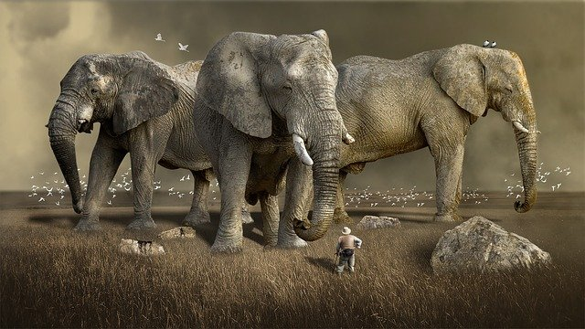 Mammal, Wildlife, Animal, Nature, Elephant, Wild