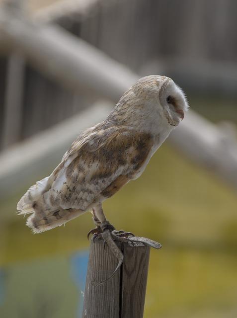 Bird, Wildlife, Animal, Nature, Feather, Owl