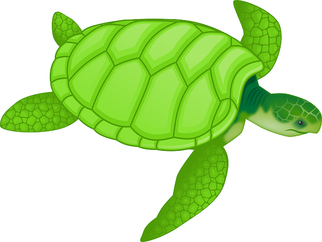 Animal, Turtle, Wildlife, Green Sea Turtle