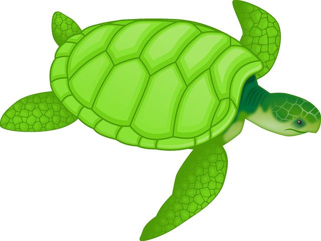 Animal, Turtle, Wildlife, Green Sea Turtle