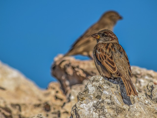 Sparrow, Nature, Wildlife, Animal, Outdoors, Bird, Rock