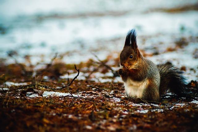Squirrel, Animal, Wildlife, Cute, Winter, Snow