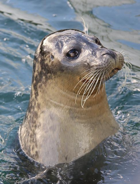 Sea Lion, Wildlife, Water, Animal, Mammal, Aquatic