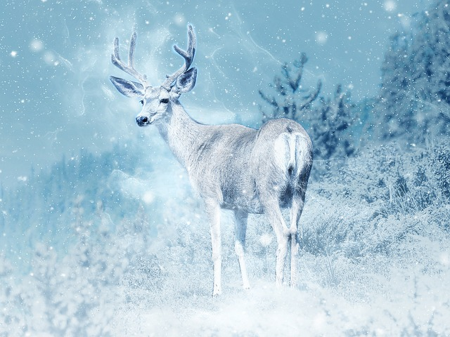 Moose, Snow, Elk, Animal, Art, Wildlife, Scrapbooking