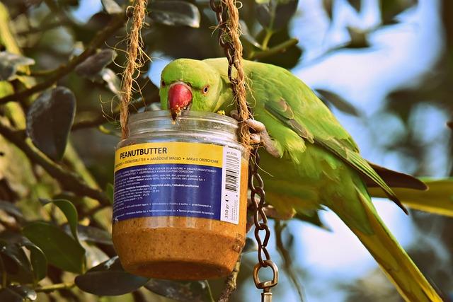 Rose Ringed Parakeet, Bird, Tropical, Wildlife, Animal