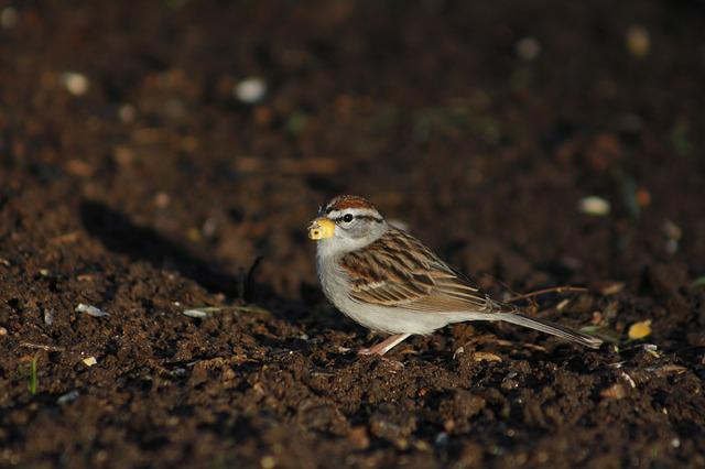 Bird, Outdoors, Nature, Wildlife, Sparrow, Wild