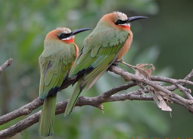 Bird, Wildlife, Nature, Outdoors, Wild